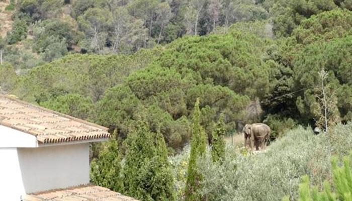El caso de Dumba: una elefanta que vive en un jardín privado demasiado pequeño y sin estanque cerca de Barcelona