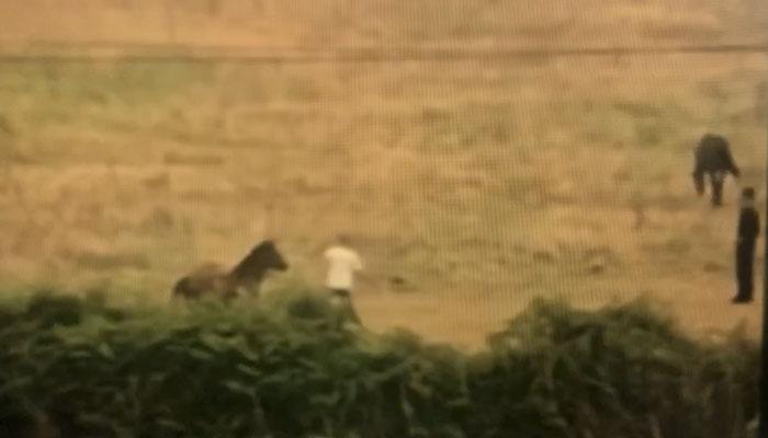 Vecinos de Lugo graban y denuncian el maltrato a un caballo en una finca