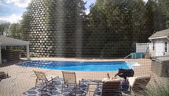 Un oso despierta a un hombre que se quedó dormido en la tumbona junto a la piscina de su casa