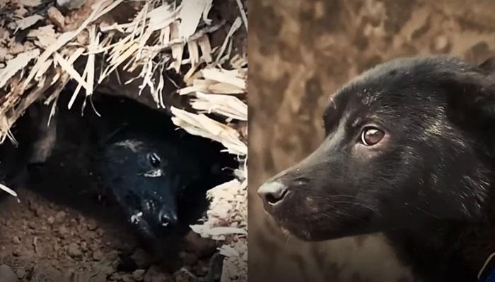 Rescatan a un perro que llevaba 37 días atrapado bajo los escombros de una casa