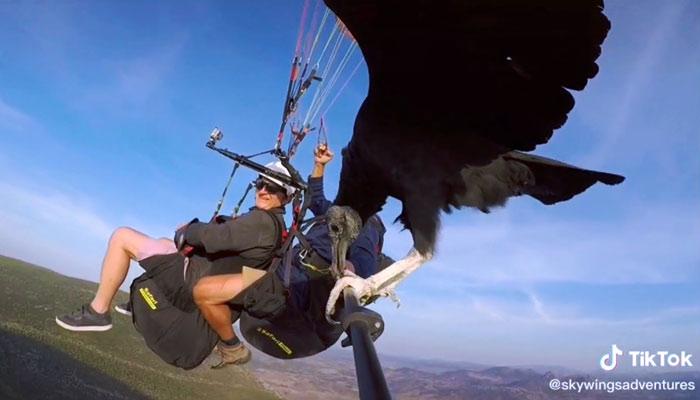 Parahawking: Haciendo parapente con un buitre al lado Algodonales, Cádiz
