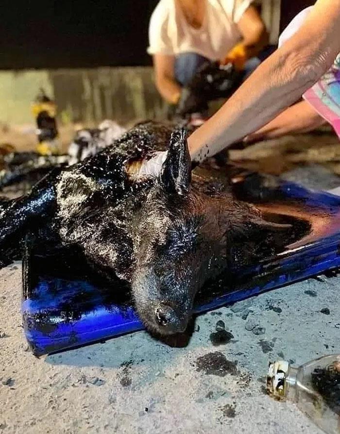 Encuentran a un perro bañado en alquitrán y le salvan la vida. Historia con final feliz