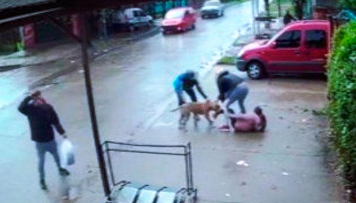 Un pitbull ataca a una niña de 7 años que esperaba con su madre en una fila para comprar