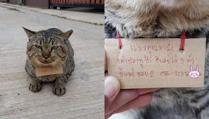 Un gato desaparecido durante tres días regresa a casa con una deuda de una pescadería al cuello