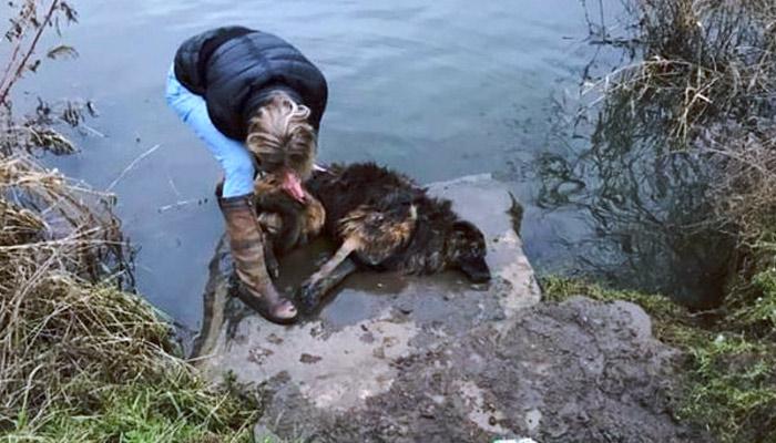 Una mujer intenta matar a su perra arrojándola a un río con una enorme piedra atada al cuello