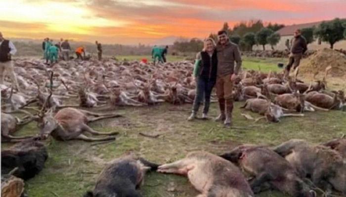 16 cazadores españoles se van a Azambuja (Portugal) y terminan con la vida de 540 jabalíes y venados en una montería