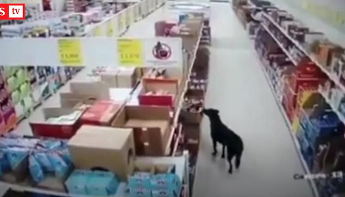 Un perro entra en un supermercado para robar una bolsa de comida