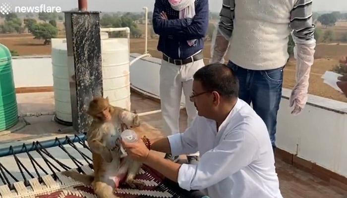 Un mono amputado tiene un vínculo muy especial con el hombre que lo salvó de un accidente eléctrico