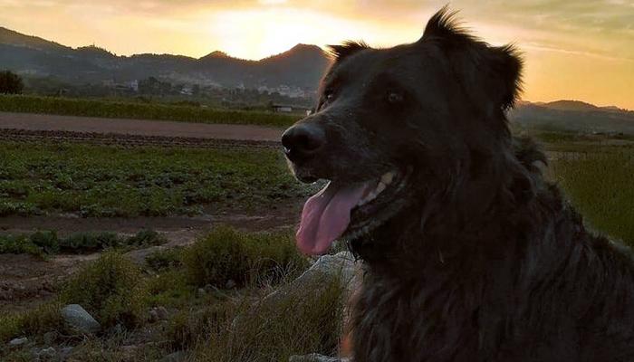 Un cazador mata de un disparo en la cabeza a un perro en Barcelona