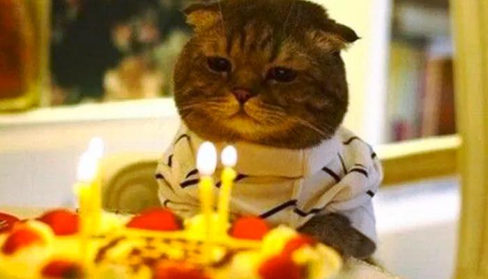 15 personas resultan infectadas de coronavirus tras acudir a la fiesta cumpleaños de un gato