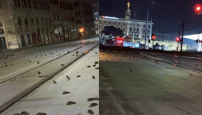 Centenares de pájaros muertos en el centro de Roma tras las celebraciones de año nuevo (Vídeos)