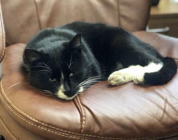 Un gato que estuvo a punto de ser triturado es nombrado viceministro regional en Rusia