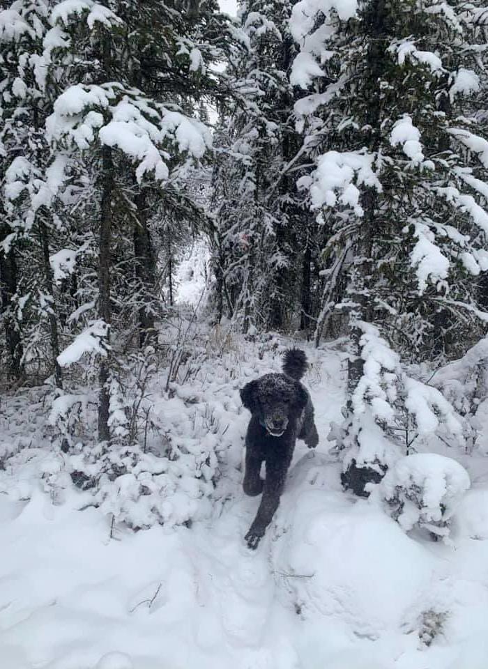 Curiosa ilusión óptica: Primero ves a un hombre corriendo hacia la nieve y luego...