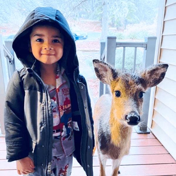 Un niño de cuatro años sale a pasear por el bosque y vuelve con un cervatillo
