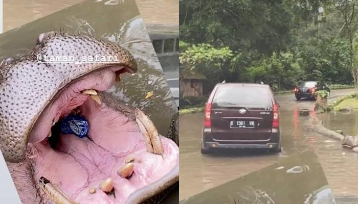 Las redes, indignadas por el vídeo de un turista lanzando basura a la boca de un hipopótamo en un safari
