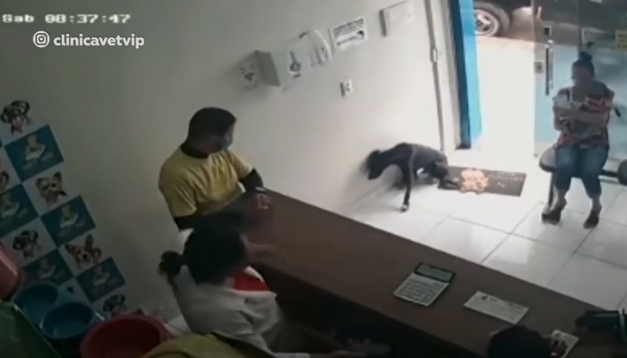 Un perro callejero herido va al veterinario para 'pedir ayuda'