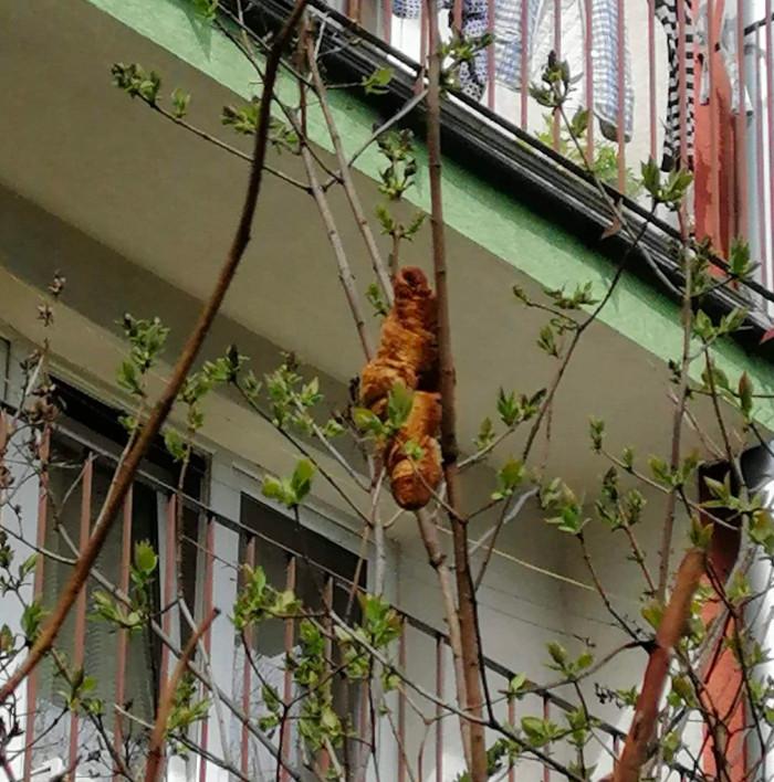 Temor por un 'misterioso animal' en un árbol que resultó ser un croissant de grandes dimensiones