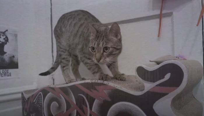 Roope-Shakir, el gato adoptado que ha fichado como cantante por una banda de heavy metal