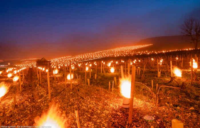 Los enólogos de Chablis (Borgoña) encienden miles de antorchas para proteger sus viñedos de las heladas temperaturas nocturnas