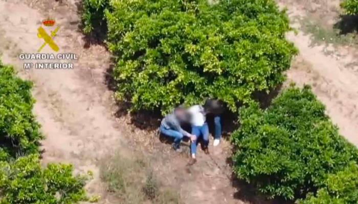 Detenido en Sevilla un narcotraficante huido desde hace 10 meses cuando intentaba escapar por unos naranjales