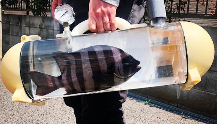 Crean una pecera portátil para transportar y mantener el pescado fresco antes de comerlo