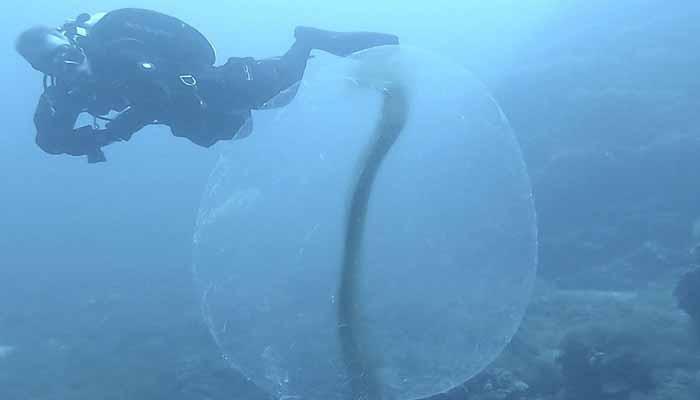 Avistan en Mallorca las misteriosas 'esferas vivas' del mar