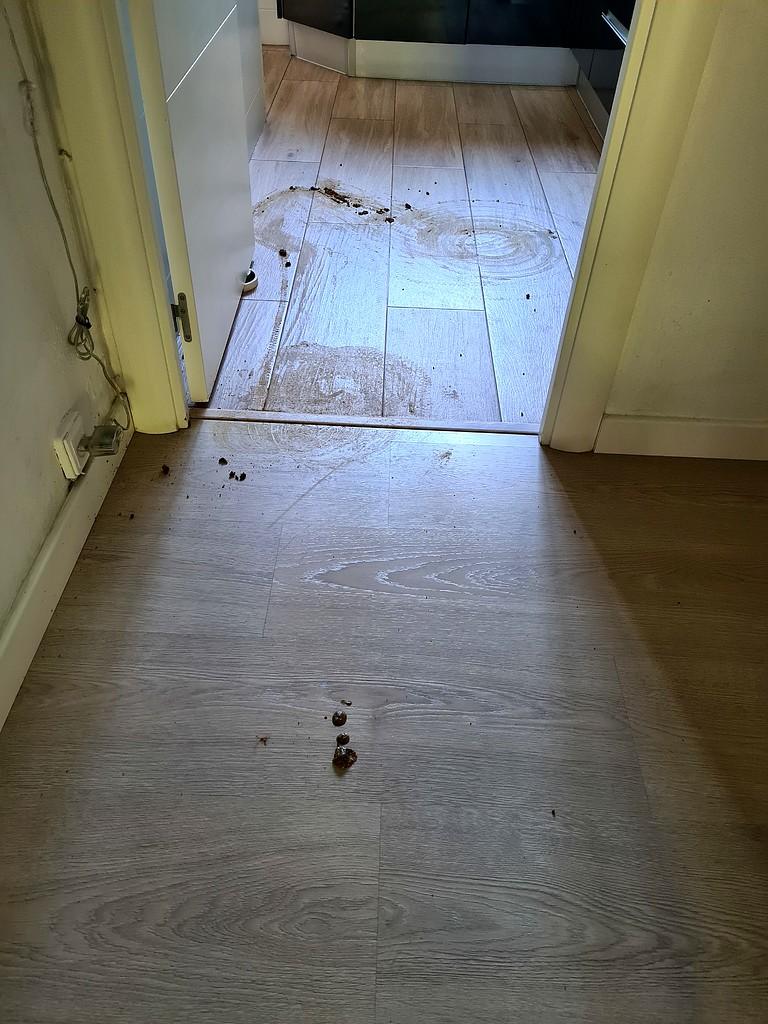''Mi perro se ha cagado en casa y la Roomba lo ha esparcido todo''