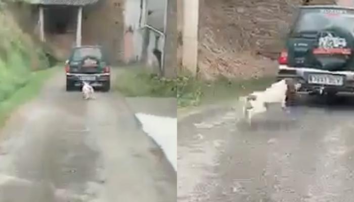 Detenido el hombre que arrastró a su perro atado a su todoterreno durante 300 metros en Lugo