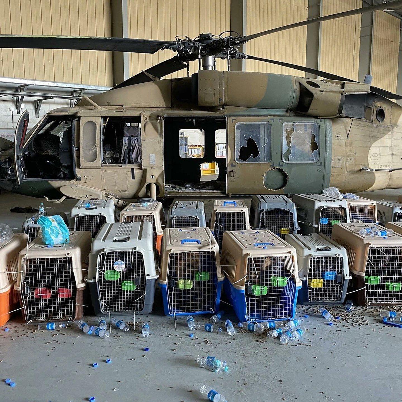 Este es el pago de la lealtad: Los norteamericanos dejaron a sus perros de servicio enjaulados y abandonados en el aeropuerto de Kabul, donde enloquecen de hambre y sed