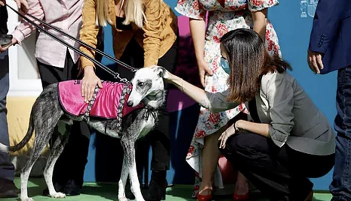 El Gobierno obligará a realizar un curso formativo antes de tener perro